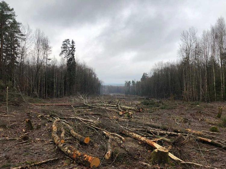 Danni Forest