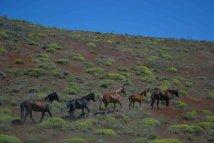 patagonia fauna
